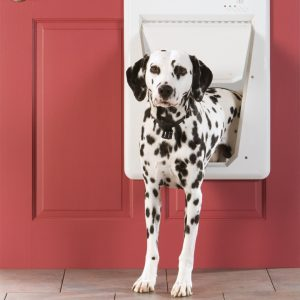 dalmatian in smart door for caring for pets