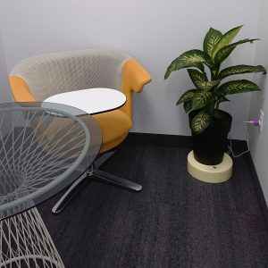 office-Dieffenbachia-Dumb Cane-Goldoon-VoltaLabs
